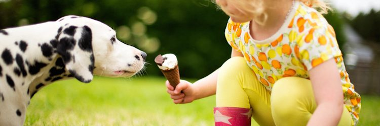 Little girl holding an ice-cream offers it to a dalmatian puppy. Close up side view and low down as they sit face to face in the garden.
